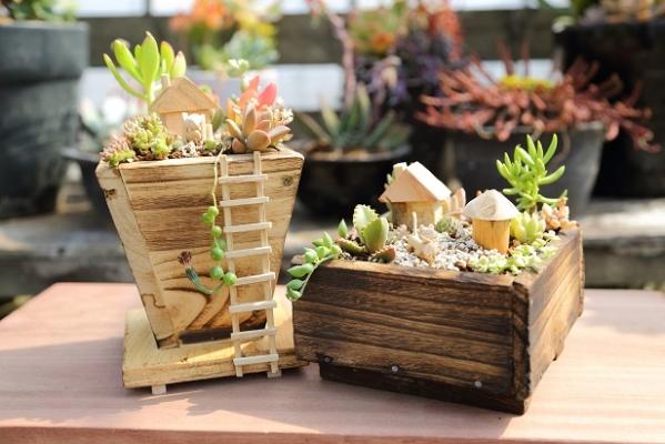 ♪多肉植物で箱庭作り(ウェルカムボードも可)♪